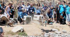Ian Somerhalder - 09/07/15 - Celebrating wildlife volunteers: See more FB photos @DawnDish event iansomerhalder : https://www.facebook.com/intlbirdrescue   https://twitter.com/IntBirdRescue/status/619568931007672320 - Twitter / Instagram Pictures