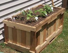 Pallet planter for patio along privacy fence.