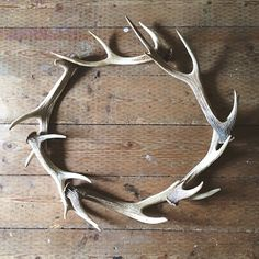 Antler wreath - I really am just wreath obsessed. There are deer that roam the land I live on. Come shedding season I should hunt for some fallen horns. Antler Wreath, Antler Art, Antler Jewelry, Deer Antler Crafts, Hunting Crafts, Shed Antlers, Deco Originale, Oh Deer, Christmas Decorations