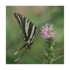 #wood - #Butterfly Wood Photo Print. Wood Print