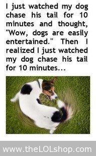Dogs Poster