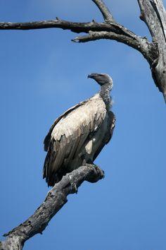 New free stock photo of sky bird animal   Download it on Pexels