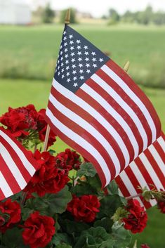 U S Flag #USA, #americanflag, #pinsland, https://apps.facebook.com/yangutu Pledge Of Allegiance, Remembrance Day, Veterans Day, Red White Blue, Red Flowers, Beautiful Flowers, Beautiful Things, God Bless America, I Love America