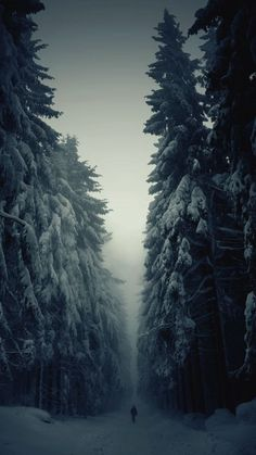 beautiful paths to walk/ Winter Forest Path, Czech Republic Beautiful World, Beautiful Places, Beautiful Pictures, Amazing Photos, Beautiful Gif, Forest Path, Snowy Forest, Snowy Woods, Snowy Trees