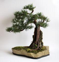 Bonsai zokei pine on the rock. Dragon, Artificial Tree, Pine Tree, The Rock, Bonsai, Metal, Plants, How To Make, Handmade