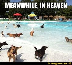 Doggy heaven <---- I thought it was all dogs go to heaven? Cute Kittens, Funny Bunnies, Funny Dogs, Funny Animals, Cute Animals, Animal Funnies, It's Funny, Animal Memes, Funny Memes