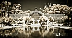 The Botanical Gardens at Balboa Park in San Diego, shot in digital infrared... We live in a gorgeous city
