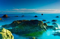 KAPITI - Terry Wilkins Photography