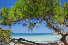Paliouri Beach, Halkidiki-The Best Beach in Kassandra Green Scenery, Breath Of Fresh Air, Orange Beach, Beach Bars, Thessaloniki, Vacation, Water, Outdoor, Canteen