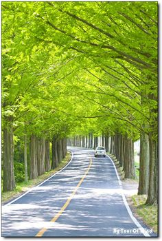 Ideas Nature Quotes Adventure Beauty Forests For 2019 Beautiful Roads, Beautiful Places To Visit, Beautiful Landscapes, Beautiful Images, Photo Background Images Hd, Photo Backgrounds, Moonlight Photography, Nature Photography, Tree Tunnel
