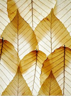 Translucent Leaf Arrangement - Mike Moats