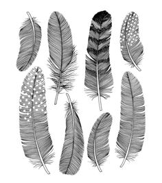 Holly Trill Feathers Art Print