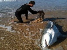 surfer rescues shark photo