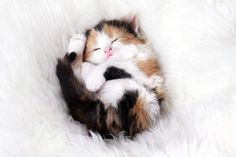Aww, I want a calico kitty :)