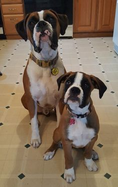 Boxer And Baby, Boxer Love, Baby Dogs, Pet Dogs, Pets, Boxer Puppies, Dogs And Puppies, Baby Friends, Dog Shop