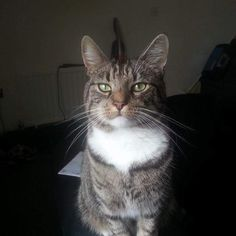 Friendly Tabby cat. Goes by the name of George.