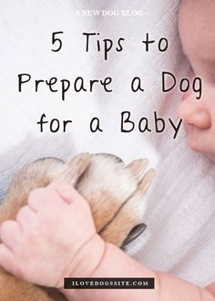 Every new parent needs to read!!! http://theilovedogssite.com/5-tips-to-prepare-a-dog-for-a-baby/ preparing for baby prepare for baby #baby #pregnancy
