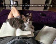 awesome Animal Memes That Will Make Your Break Awesome ( 50+ Pictures)