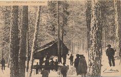 Evisa - Forêt d'Aitone