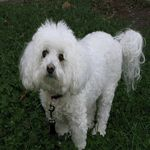 A small fluffy dog breeds list including 29 fluffy small dogs. A guide on which is the best dog for you and a top 10 awards with winners from each category. Small Fluffy Dog Breeds, Cutest Small Dog Breeds, Cute Small Dogs, Cute Dogs Breeds, Fluffy Dogs, Little Dogs, Bichon Frise Rescue, Best Dogs For Kids, Dog Breeds List