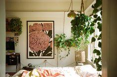 leah reena: #houseplants #hangingplants