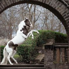 Ich liebe besondere Location  #lovewhatyoudo #adobe #photo #power #photoshop #photoshoot #photography #photooftheday #horse #paint #steigen #köln #horselove #lovehorse #pferdeschoenheiten #pferdefotografie #pferd #horse #horsesofinstagram #rahlmeier #equine #equinephotography