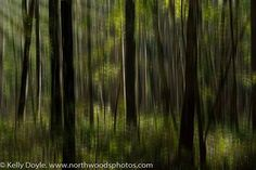 Abstract forest motion blur. North Woods Photos's photo.