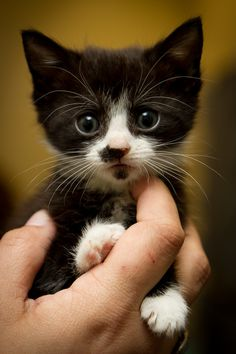Give this little tiny a squish! :]]]