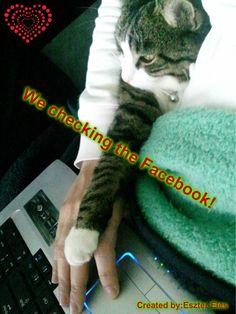 Checking fb