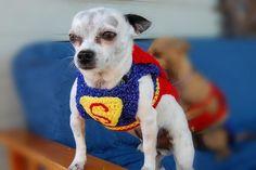 dog sweater crochet patterns | Dog Sweaters : Crochet Patterns, Knitting Patterns, Hooks, Needles