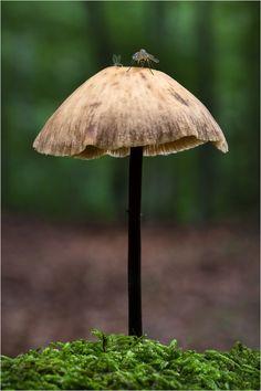 Tatort Knoblauchschwindling von Moonshroom
