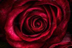 kissed by a rose by LoboStudioHamburg on @creativemarket