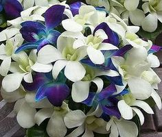love these!! i had an all blue lei when i graduated high school!