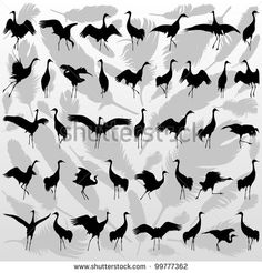 Crane bird and feathers detailed silhouette illustration collection background vector - stock vector