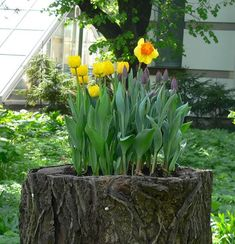 take a look at these examples of tree stump planters that will leave you desperate to make one of your own! Flower Planters, Garden Planters, Succulents Garden, Flower Pots, Succulent Planters, Hanging Planters, Cactus Plants, Tree Stump Decor, Tree Stump Planter