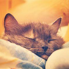 prrrrrrrrrrrrrrrrrrrrrrrrrrrr #cat #catsofinstagram #kitty #cats #meowaish #catstagram #instacat #pet #catlover #kittens #pets #catoftheday #petstagram #animal #ilovemycat #animals #instagood #adorable #lovecats #instagramcats #photooftheday #meow #nature #love #lovekittens #furry #sleeping #kittensofinstagram