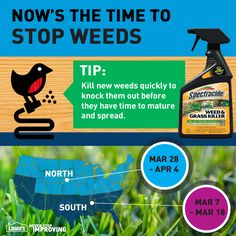 Now's the time to stop weeds!  Tip: Kill new weeds quickly to knock them out before they have time to mature and spread.