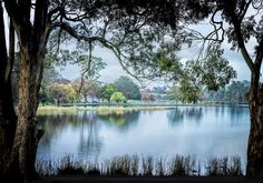 Lake Rotoroa is the perfect place to go for a walk to take in the scenery, feed the ducks, take the kids to the incredible playground or have lunch at the café. Stuff To Do, Things To Do, Google Plus, Perfect Place, Playground, Hamilton, New Zealand, Places To Go, Scenery