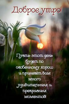 добрий ранок - The world's most private search engine Good Morning Gif, Good Afternoon, Good Morning Quotes, Morning Pictures, Inspiring Quotes About Life, Wish, Poems, Life Quotes, Texts