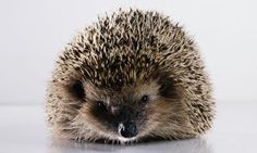 'Gardens: Sharp Practices to Encourage Hedgehogs', photography by Christopher Thomas/ Getty Images, via The Guardian.