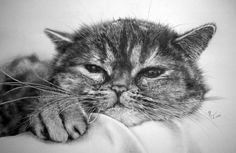 15 Amazing Pencil Cat Drawings You Wouldn't Believe Were Done by Hand