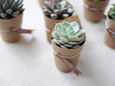 Minis plantes comme cadeau d'invité à son mariage !