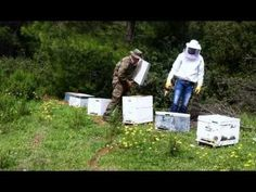 Spring The spring is the start of the beekeeping season. Getting off to a good start will set up for rest of the season. March This is a critical time for yo. Best Start, Beekeeping, Bees, March, Seasons, Spring, Food, Seasons Of The Year, Essen