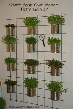 tin can garden ideas - Google Search