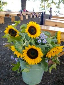 Love the flowers in the galvanized bucket Plant dwarf sunflowers in bucket
