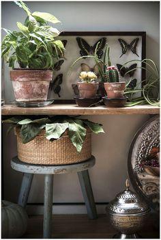 Urban Jungle Bloggers: My Plant Shelfie via @mllepoirot #pourchezmoi
