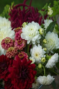 We offer bulk buckets of blooms for weddings, parties and events. This bucket is a 'custom colour palette harvest' in burgundy, wine and white from August. September Flowers, Diy Wedding Flowers, Burgundy Wine, Flower Farm, Blooming Flowers, Natural Looks, Buckets, Dahlia, Harvest