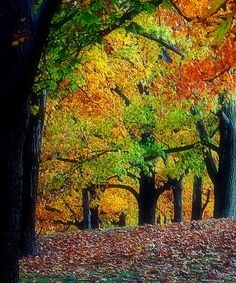 Autumn Forest by TheMoonAndSun