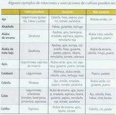 INFORMACIÓN PARA LOS HORTELANOS: TABLAS DE ASOCIACIÓN DE CULTIVOS