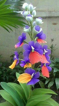 Blossom Garden - Paradise of Flowers! Unusual Flowers, Beautiful Flowers Garden, Rare Flowers, Types Of Flowers, Amazing Flowers, Pretty Flowers, Orchid Flowers, Chiffon Flowers, Tropical Flowers